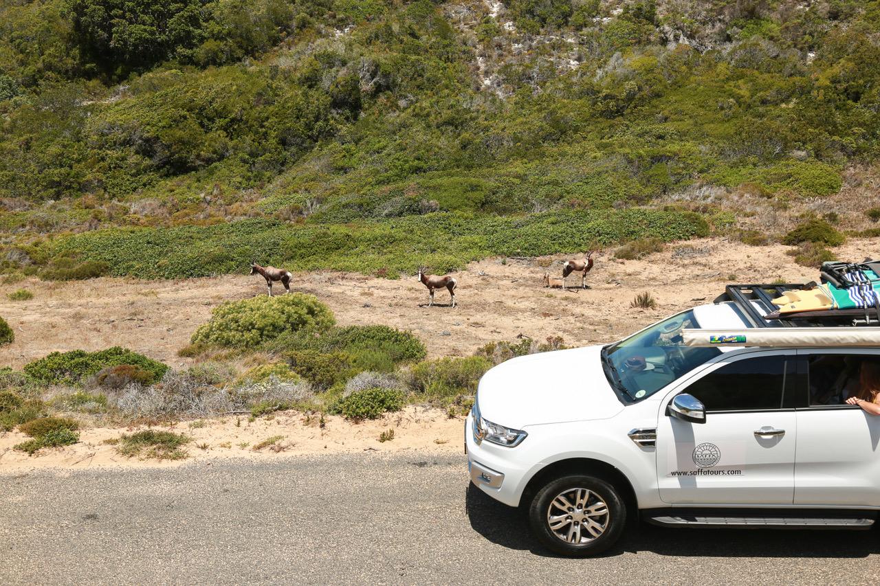 private tours cape town cape point saffa tours wildlife