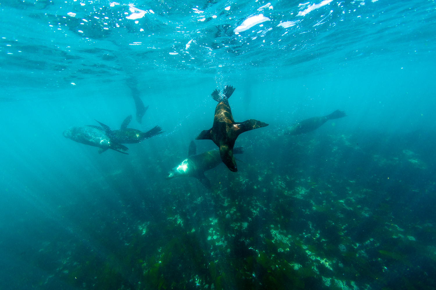 private tour cape town seal island snorkelling saffa tours