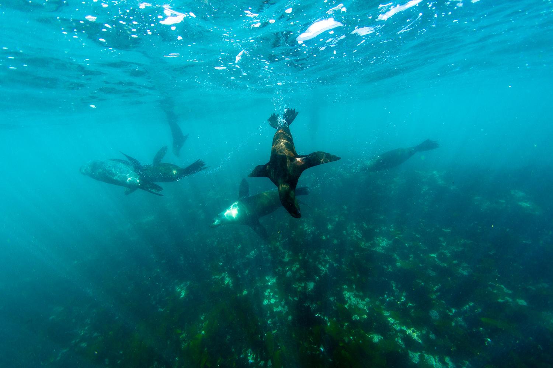 private tour cape town seal island snorkelling saffa tours
